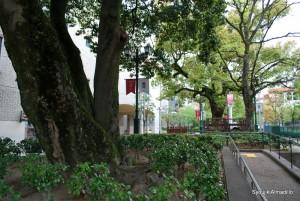 宝塚大劇場への道